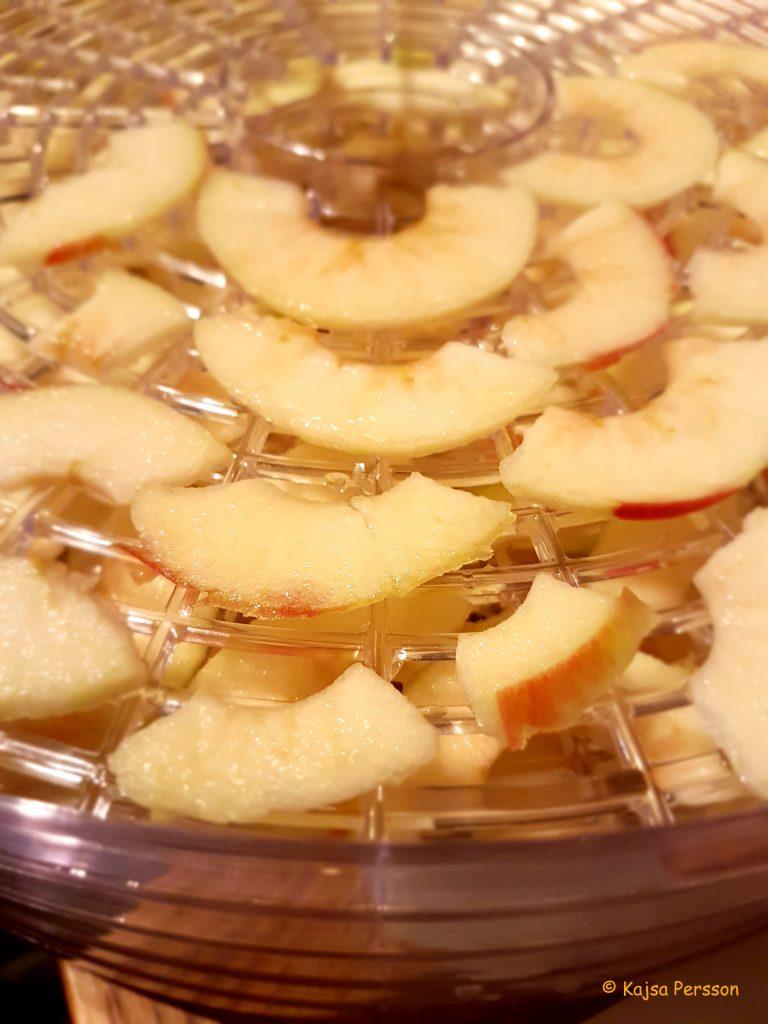 Skivade äpplen i vår frukttork