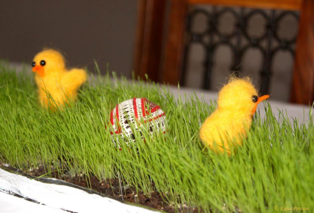 Kycklingar i det gröna