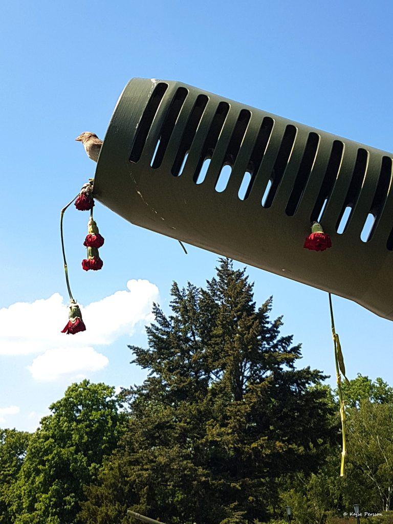 Fågel som byggt bo i en gamal sovjetisk kanon